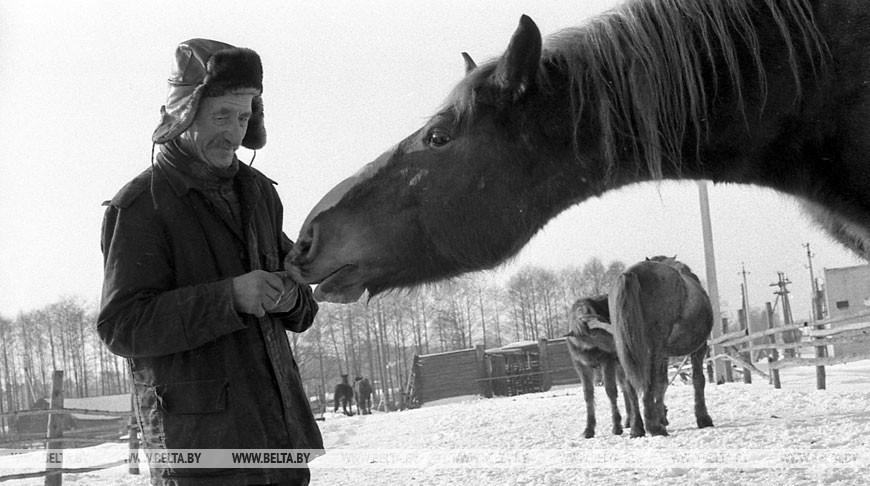 Перед эвакуацией скота. Наровлянский район, декабрь 1986 года