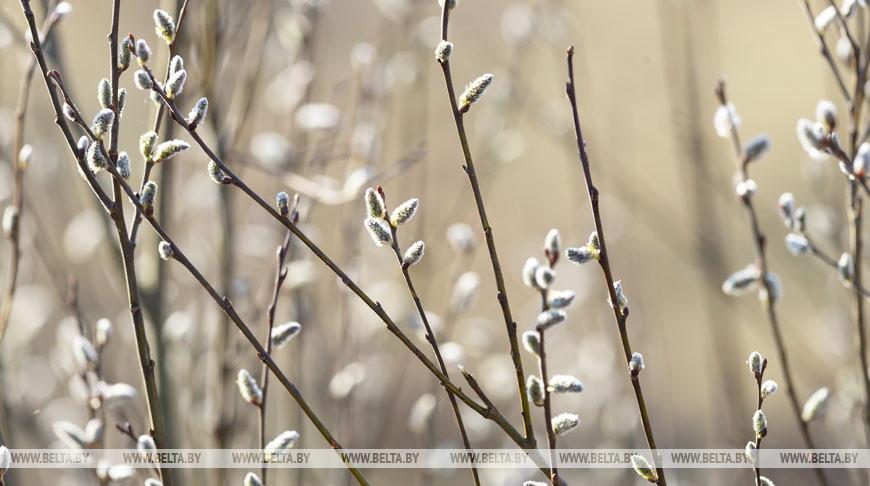 Дождь с мокрым снегом ожидается по северо-востоку Беларуси 28 апреля