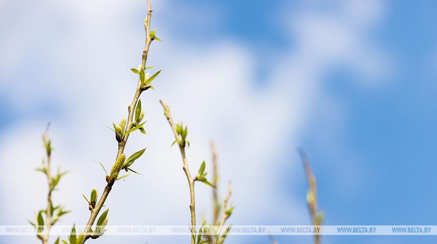 Оранжевый уровень опасности из-за сильного ветра объявлен в Беларуси на 4 мая