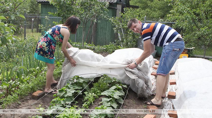 Санэпидслужба дала рекомендации поприменению средств защиты растений наприусадебных участках