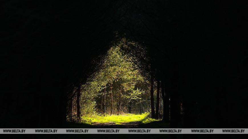Запреты и ограничения на посещение лесов действуют в 16 районах Беларуси