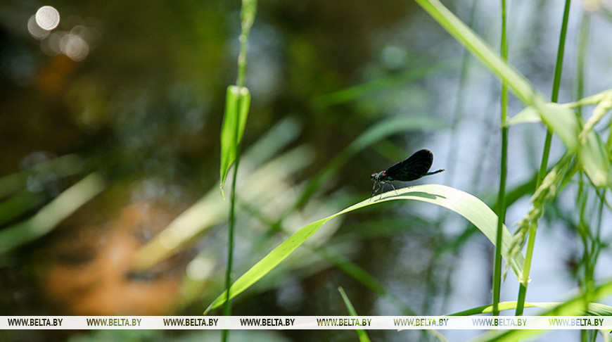 Пресс-конференция о развитии экологического туризма пройдет в пресс-центре БЕЛТА 16 августа