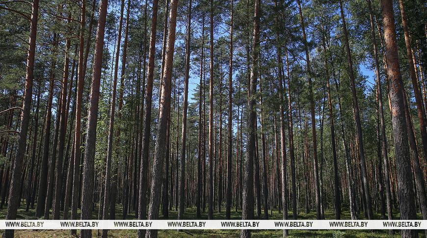 В Лидском районе введены ограничения на посещение лесов