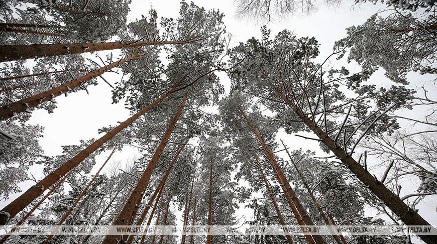 В Брестской области будут расширять лесные просеки возле линий электропередачи