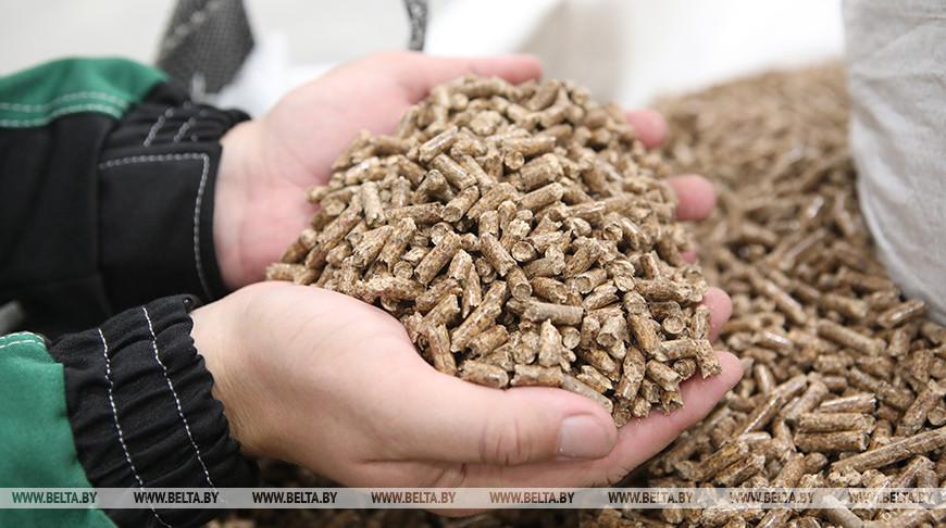 Лесхозы Брестской области за 2020 год увеличили на треть объемы выручки