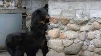 Скриншот из видео Гродненского зоопарка