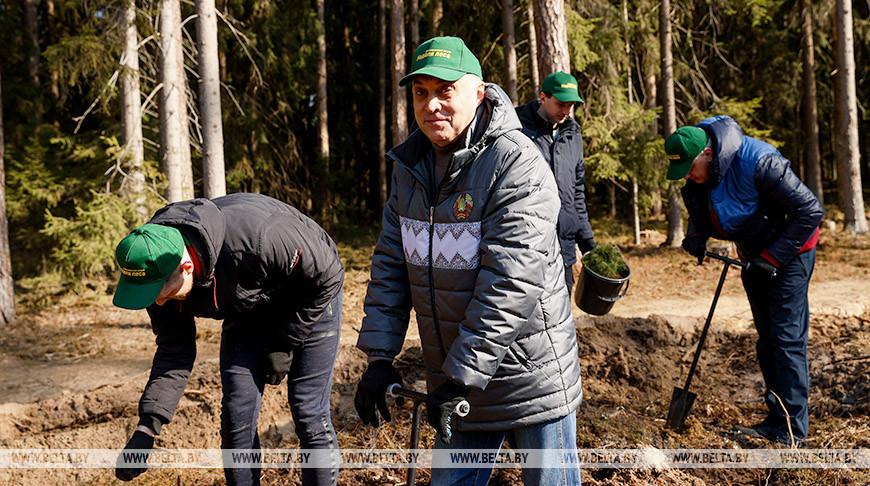 Государственный секретарь Совета безопасности Александр Вольфович во время посадки деревьев
