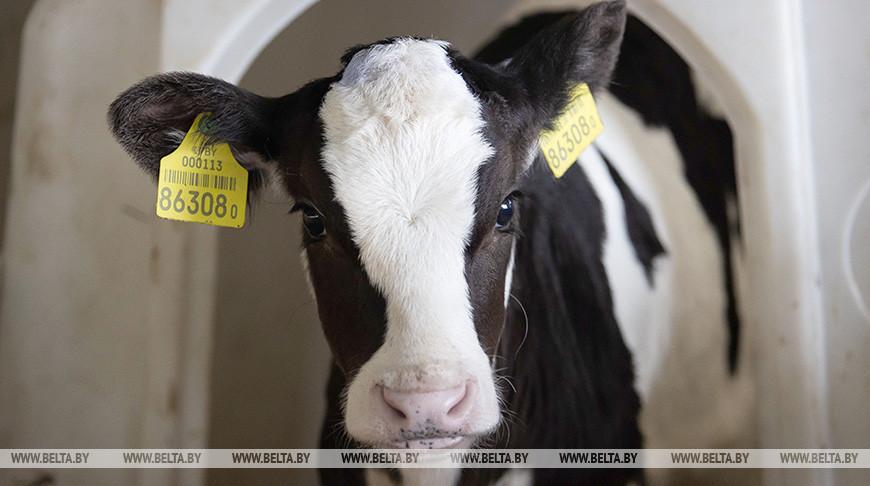 Брестская область экспортирует около 50% произведенной в регионе продукции животноводства