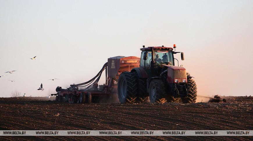 Аграрии Гомельской области завершили сев ранних зерновых и зернобобовых
