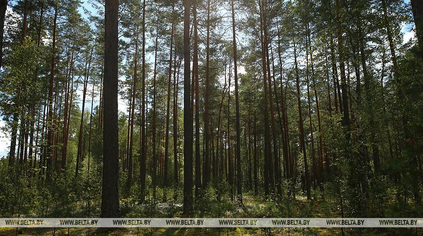 Ограничения на посещение лесов введены в 6 районах Беларуси
