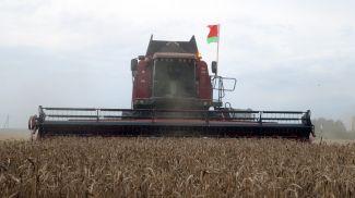 Могилевский район первым в области намолотил 100 тыс. т зерна