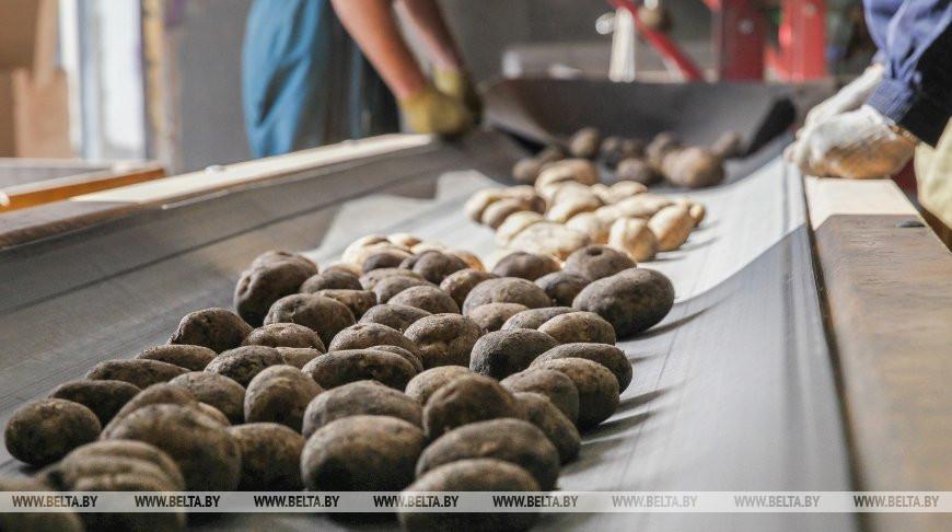 На Толочинском консервном заводе завершается установка линии по производству картофеля фри