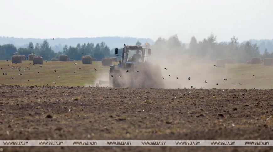 Несвижский и Дзержинский районы лидируют по темпам сева озимых зерновых в Минской области