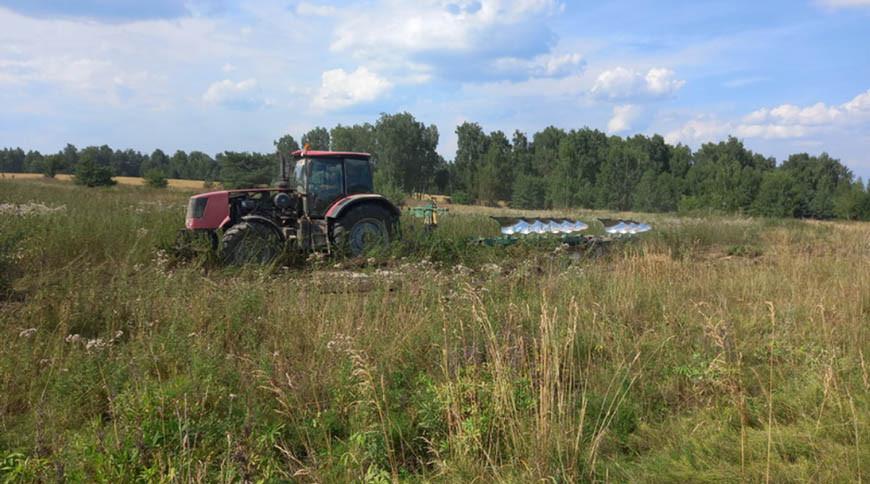 Плантацию дикорастущей конопли уничтожили в Славгородском районе
