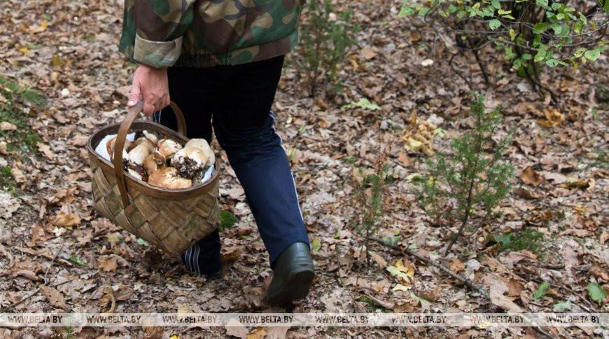 В Лиозненском районе спасатели нашли двух заблудившихся в лесу пенсионеров