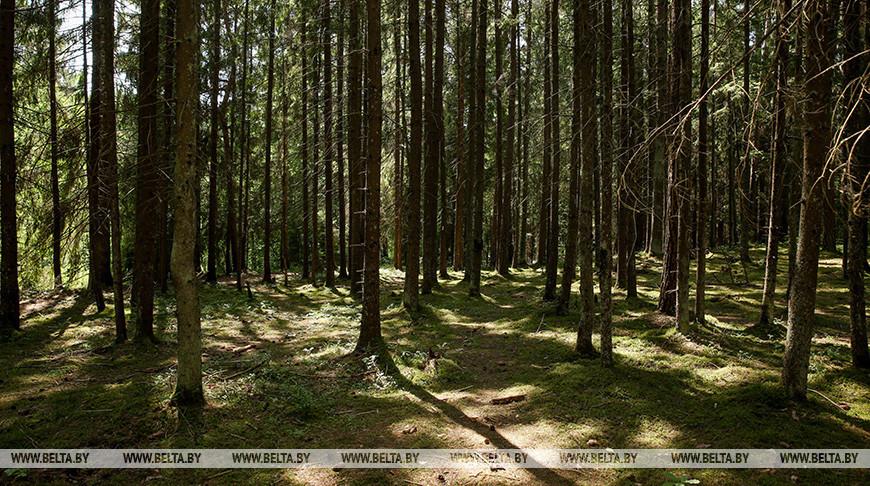 В Беларуси за сутки более 50 человек привлекались к поиску потерявшихся в лесах