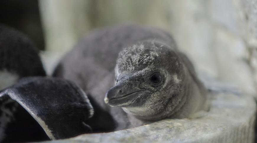 Фото Приморского океанариума