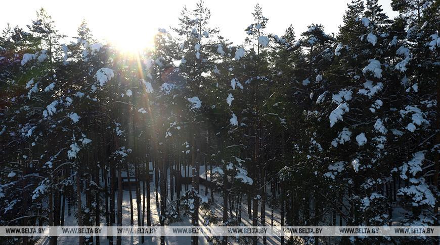 За последние 30 лет на планете уничтожено 420 млн гектаров леса