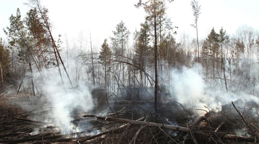 В Иркутской области тушат крупный лесной пожар в 5 км от поселка