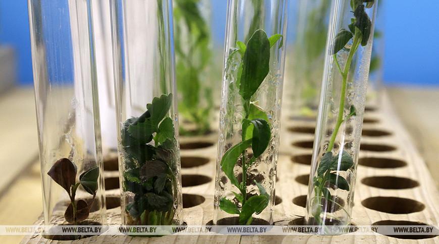 Новый вид растения обнаружен на юго-западе Китая