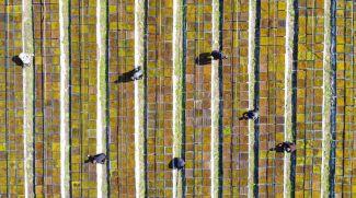 Выращивание мха. Фото СИНЬХУА