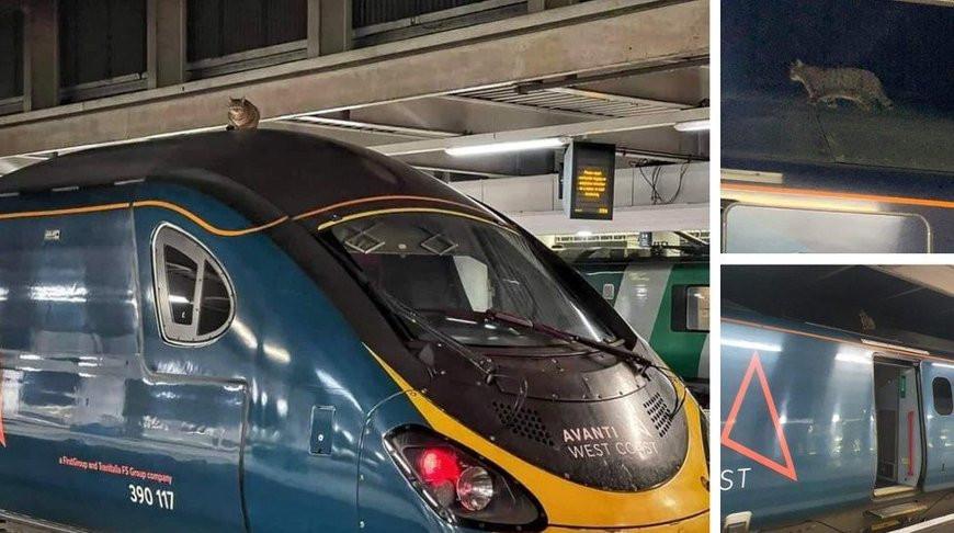 Кошка в Великобритании задержала поезд на 2,5 часа (Фото)