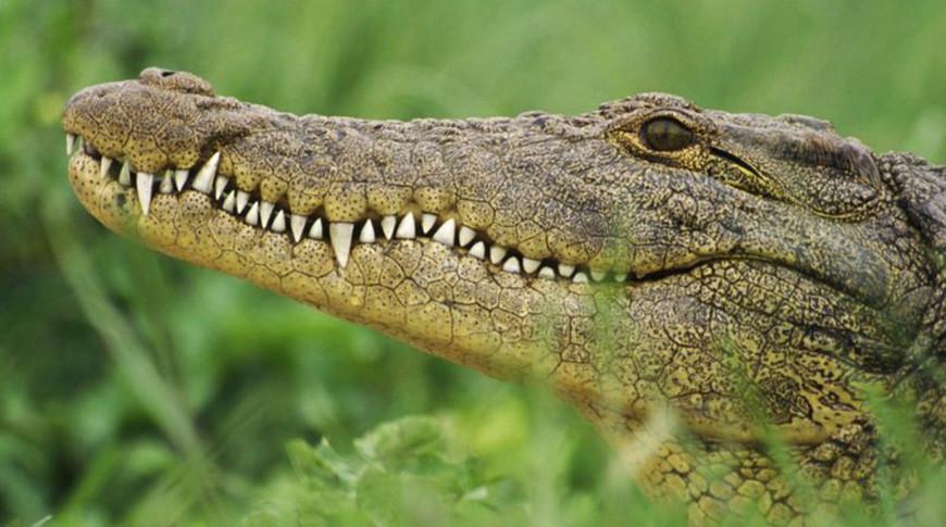 С фермы в ЮАР сбежали десятки крокодилов