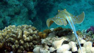 Фото Fishbiosystem