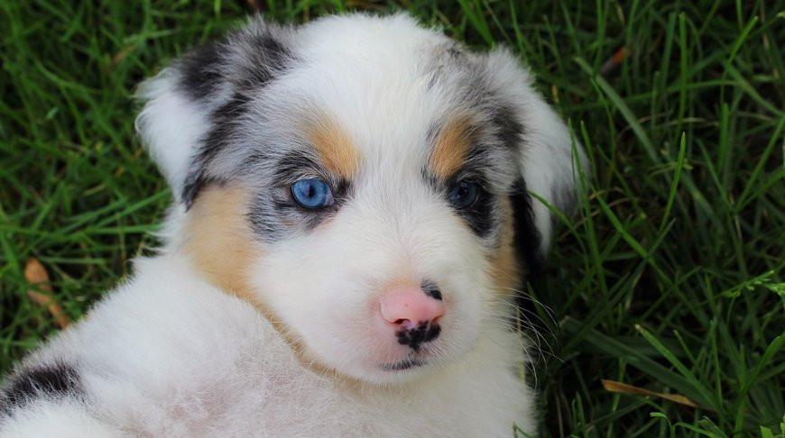 Самое милое видео: глухой щенок радуется возвращению своего хозяина