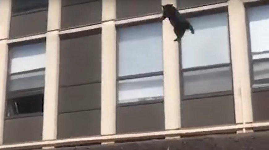 Осталось восемь жизней? Кот выпрыгнул из горящего здания и спокойно пошел по своим делам