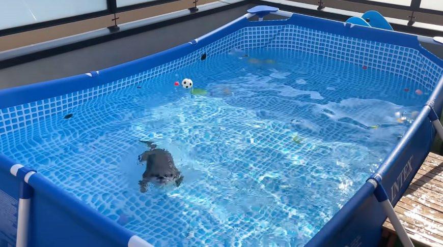 Выдрам подарили новый бассейн: их реакция развеселила миллионы юзеров (Видео)