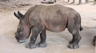 Фото из Facebook-аккаунта зоопарка