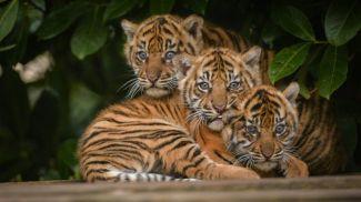 Фото God-tigra