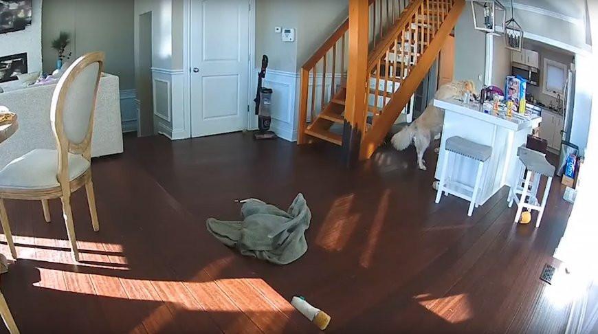 Голодный пес едва не спалил дом хозяев в США (Видео)