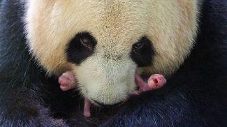 Фото из Twitter-аккаунта зоопарка ZooParc de Beauval