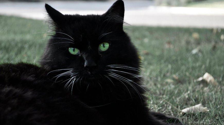 С Василием лучше не связываться: храбрый кот отогнал от хозяев огромного медведя (Видео)