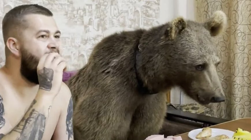 Человек со своим другом медведем кушают и смотрят мультик. Где же это могло произойти? (Видео)