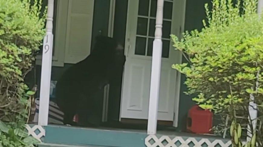 Косолапый взломщик? Медведь с легкостью чуть не вломился в дом к человеку (Видео)