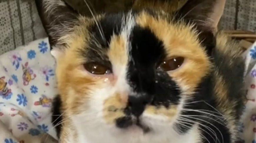 Кошка расплакалась, когда хозяева оставили ее, уехав на море - очень трогательно! (Видео)