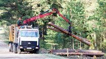 Какие новации планируется внести в Лесной кодекс