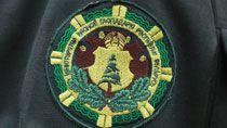 В Беларуси вступил в силу обновленный Лесной кодекс