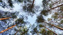 Белорусские леса под надежной защитой от пожаров