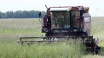 Как сельское хозяйство Беларуси справляется с последствиями жары - Лукашенко заслушал доклады профильных чиновников