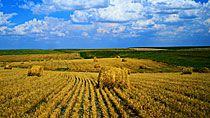 В создание агропромышленных производств под Руденском планируется привлечь более $1 млрд