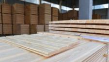 Пеллетные заводы и модернизация цехов - как в Беларуси обеспечат полную переработку древесины