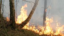 Огонь приходит по траве, или Как в Гомельской области борются с пожарами в экосистемах