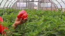Рост хозяйств, господдержка и перспективы - как сегодня развивается фермерство