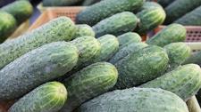 Почему урожай огурцов в Ольшанах оказался под колесами авто. Что говорят местные власти и закупщики