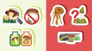 Профилактика отравлений грибами