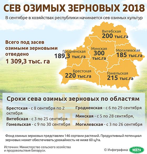 Сев озимых зерновых-2018